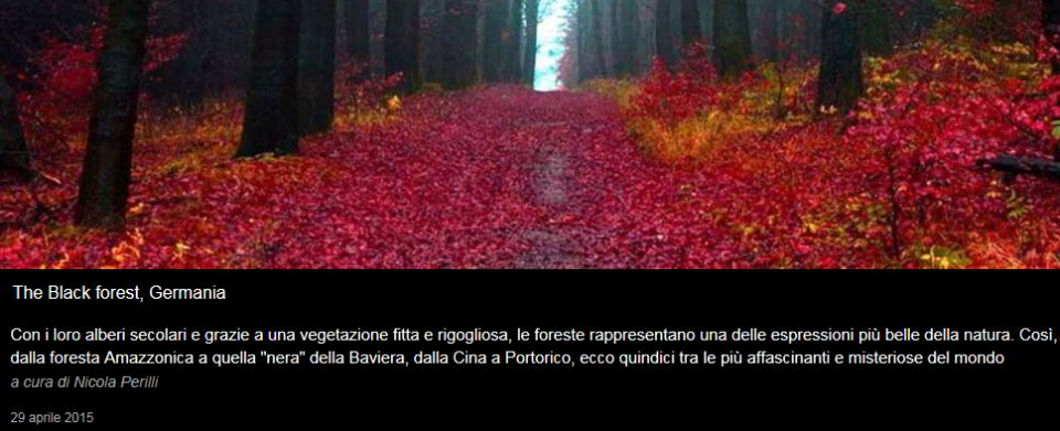La Foresta nera della Baviera - Repubblica.it